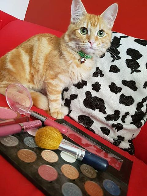 animal-friendly-make-up-brands